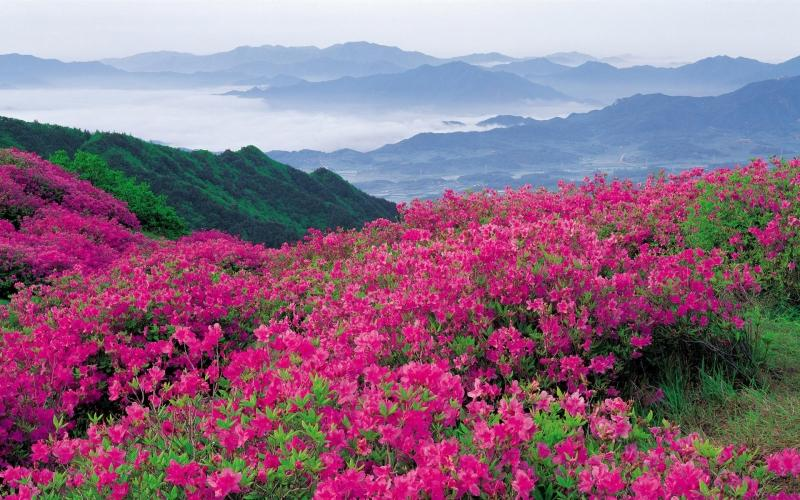 Image result for دره گل ها | Valley of Flowers هند